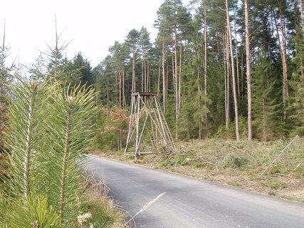 FOTKA - posed v lese .