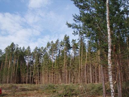 FOTKA - v lese - březen 2012 -