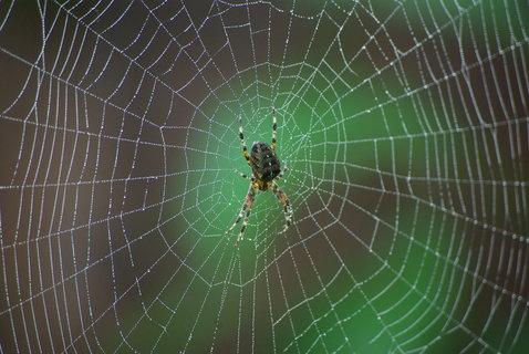 FOTKA - pavouk na orosene pavucine