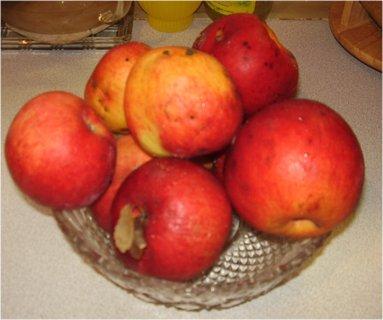 FOTKA - jablka