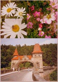 FOTKA - Vzpomínání..Les království