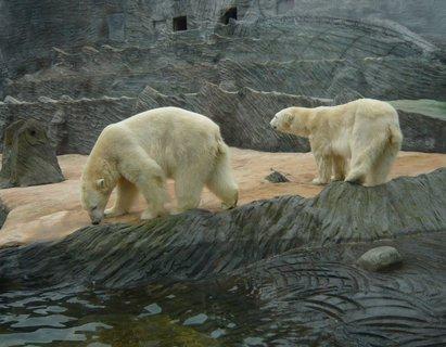 FOTKA - medvědi v pražské ZOO