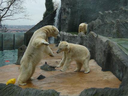 """FOTKA - takhle fotí medvědy """"obyčejným"""" foťákem moje maminka (jestli to tam znáte, tak to je foceno přes sklo...)"""