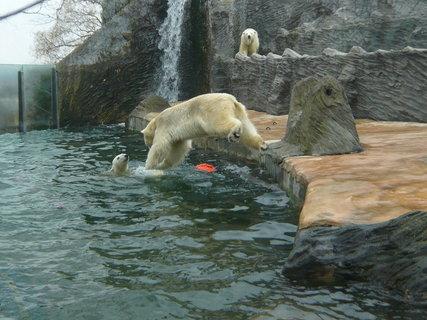 FOTKA - medvědí šipka