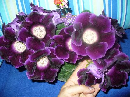 FOTKA - Takhle kvetla loni