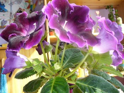 FOTKA - Loňské květy