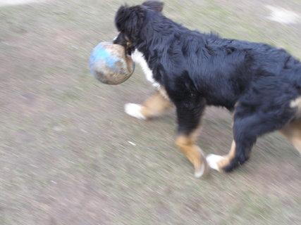 FOTKA - můj míč