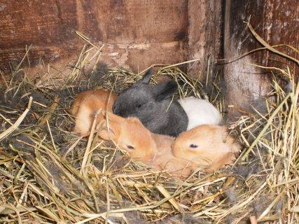 FOTKA - jaro v králikárně