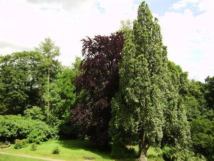FOTKA - náchodská zahrada
