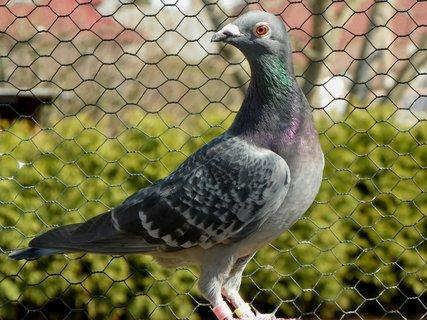 FOTKA - Foto do holubí občanky