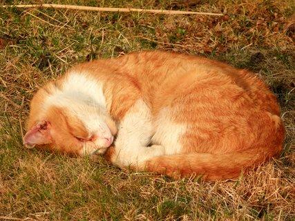FOTKA - Cipísek odpočívá pod třešní