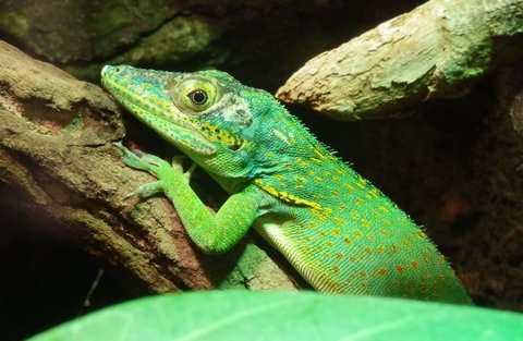 FOTKA - dokonalost tvarů a barev ( z pavilonu plazů a ještěrů v pražské ZOO)