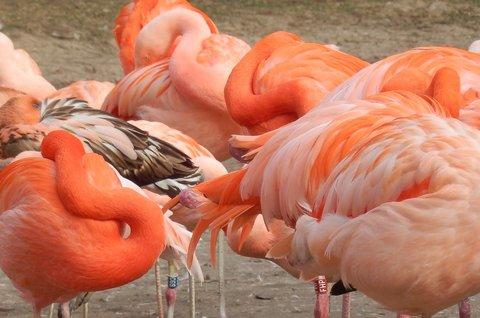 FOTKA - všechny hlavy schovat teď! aneb záplava oranžové