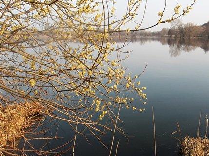FOTKA - U jezera v Poděbradech ..