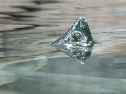 FOTKA - želva juká z vody II