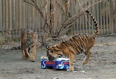FOTKA - jedna papírová krabice a takové radosti aneb hravé kočičky v pražské ZOO