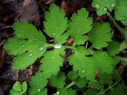 FOTKA - korálky po dešti..,,,