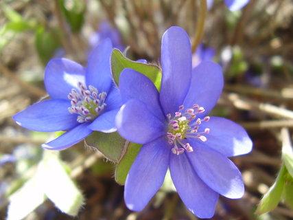FOTKA - všechno krásně kvete....