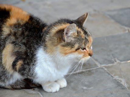 FOTKA - Číhání na myšku