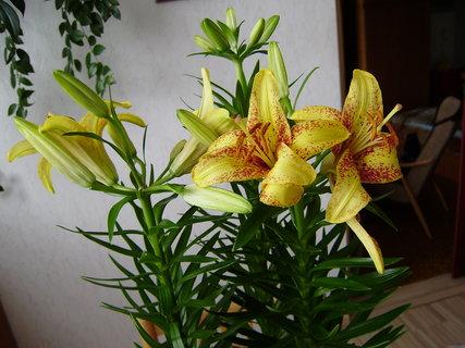 FOTKA - a znovu kytky 7