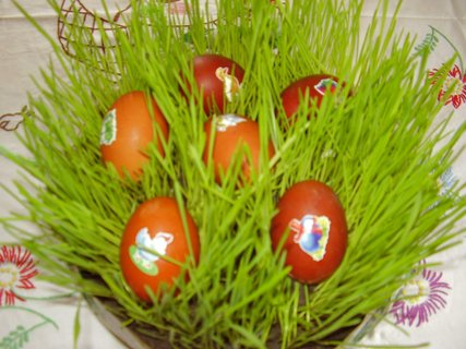 FOTKA - vajíčka v travičce-1