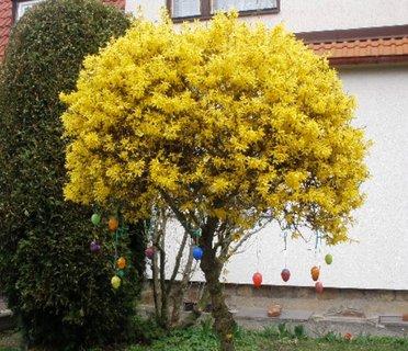 FOTKA - Zlatice ozdobená vajíčky