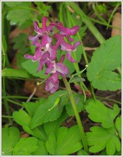 FOTKA - Fialová květina