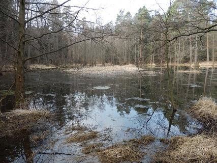 FOTKA - rybníček skrytý v brdských lesích, žáby pořádají koncert