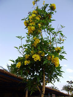 FOTKA - Žlutá krása