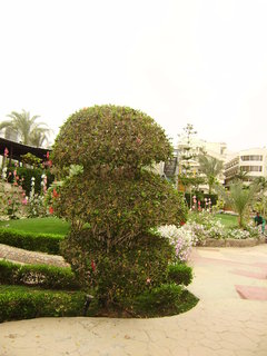 FOTKA - Upravená zeleň