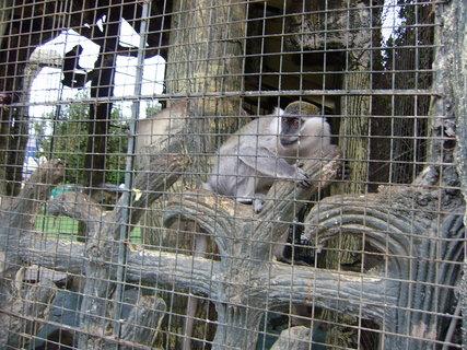 FOTKA - Opičky v klecích na zahradě