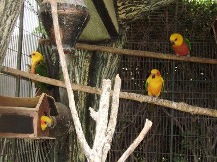 FOTKA - Papoušci