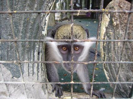 FOTKA - Opičák v kleci