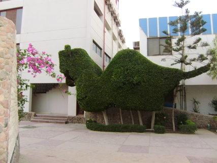 FOTKA - Velbloud ze zeleně