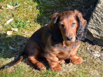 FOTKA - Takový malý a už dělá psí oči :-)