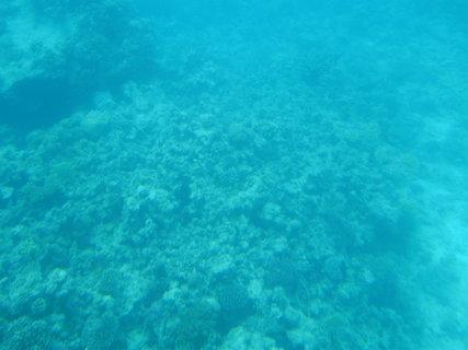 FOTKA - Mořský svět
