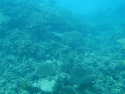 FOTKA - Krása korálů 1