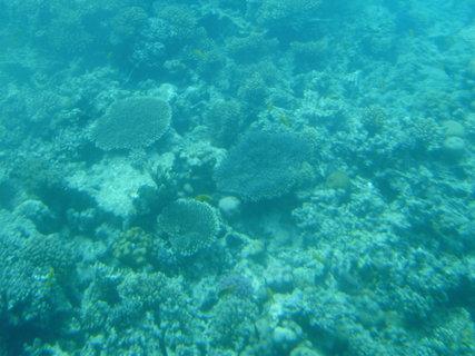 FOTKA - Krása korálů 2
