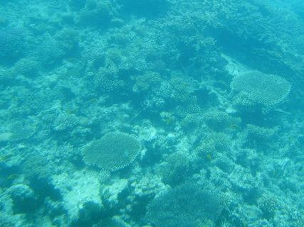 FOTKA - Krása korálů 3