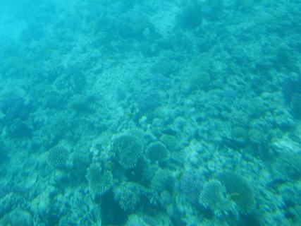 FOTKA - Krása korálů 5