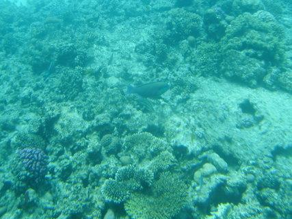 FOTKA - Krása korálů 6