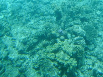 FOTKA - Krása korálů 7