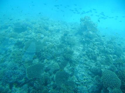 FOTKA - Krása korálů 8