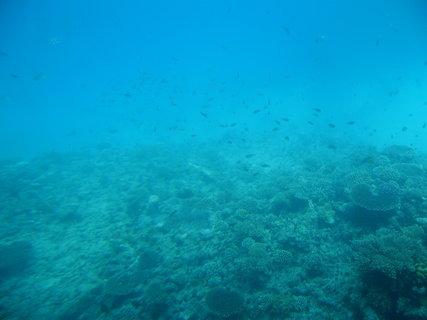 FOTKA - Krása korálů 9