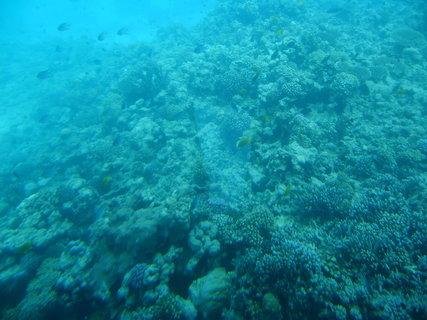FOTKA - Krása korálů 10