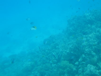 FOTKA - Krása korálů 11
