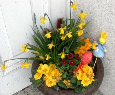 FOTKA - Jarní miska