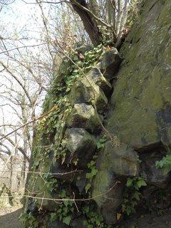 FOTKA - Slánská hora, čedič zde tvoří podobné sloupy jako známe z Kamenných varhan u Nového Boru