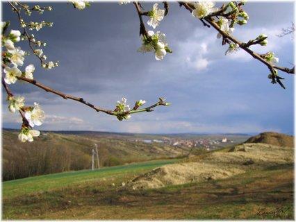 FOTKA - Záběr s jarními větvičkami a výhledem