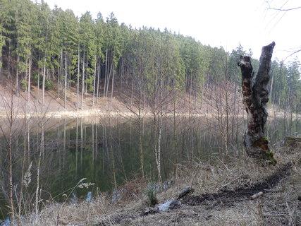 FOTKA - k vodě jsou vydupané pěšinky od lesní zvěře